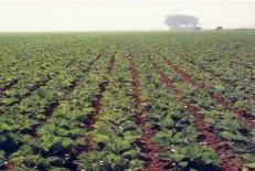 کتاب اقتصاد کشاورزی دکتر شوکت + دانشجویان